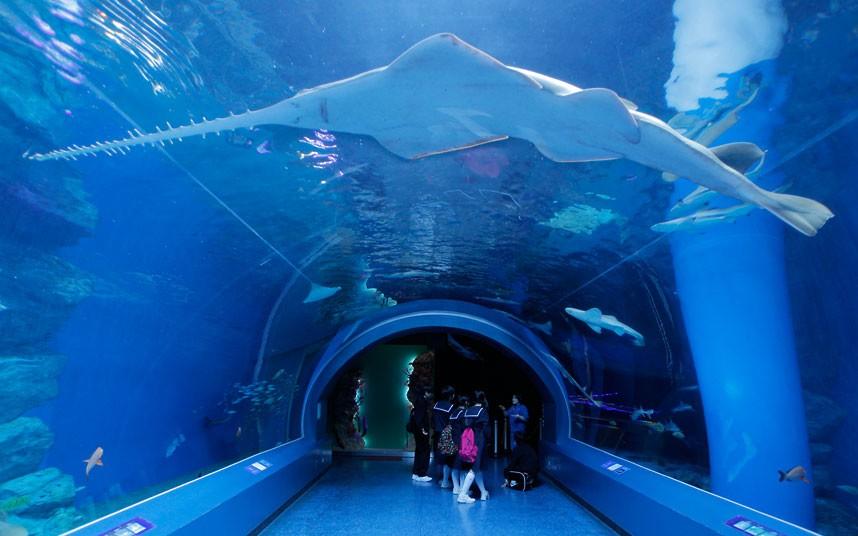 Aquarium in Atlanta, the United States