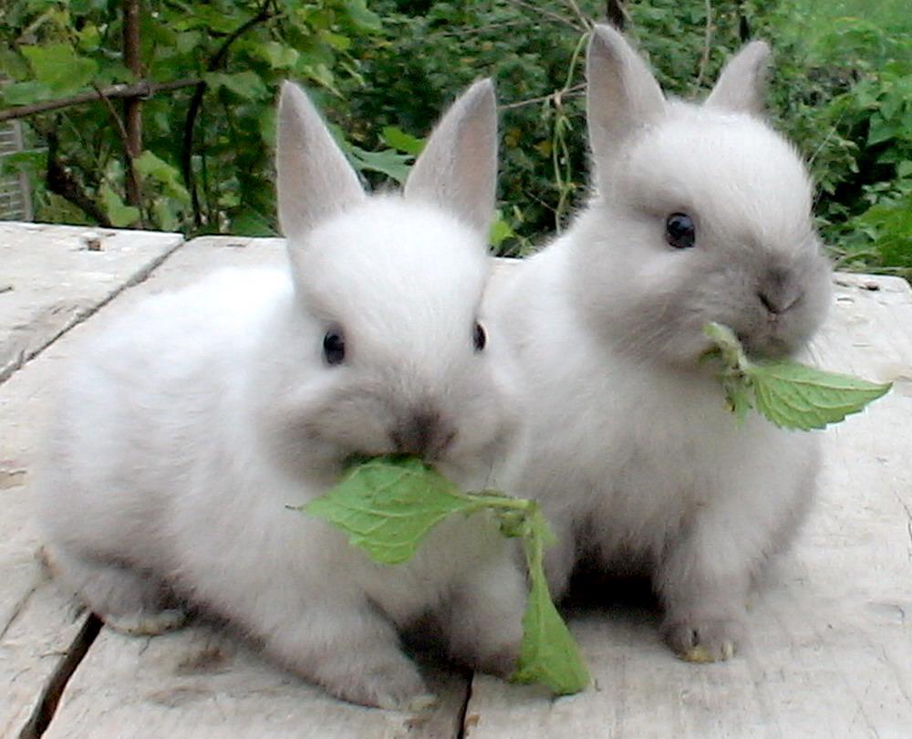 Rabbit - cutest animals in the world