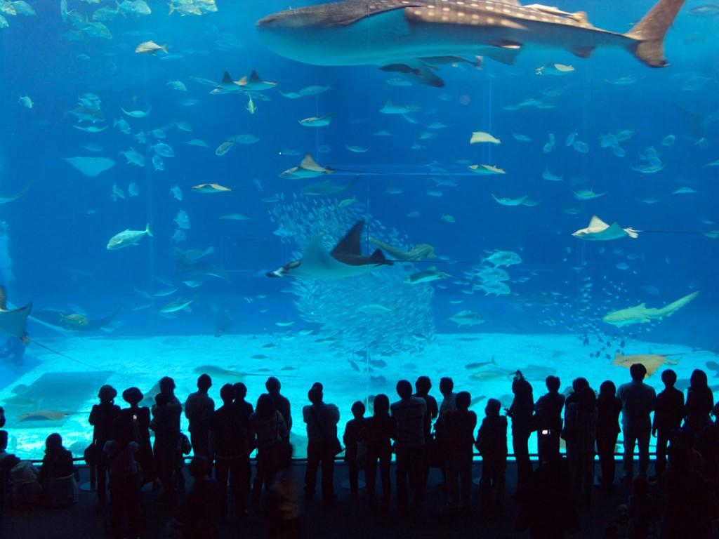 Turkuazoo Aquarium, Turkey